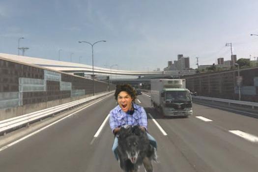 照英が泣きながら犬に跨がって高速道路を走ってる画像ください