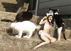照英がビキニで猫会議に参加してる画像ください