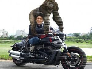 照英が泣きながらゴリラを肩車してバイクであぜ道を疾走してる画像ください